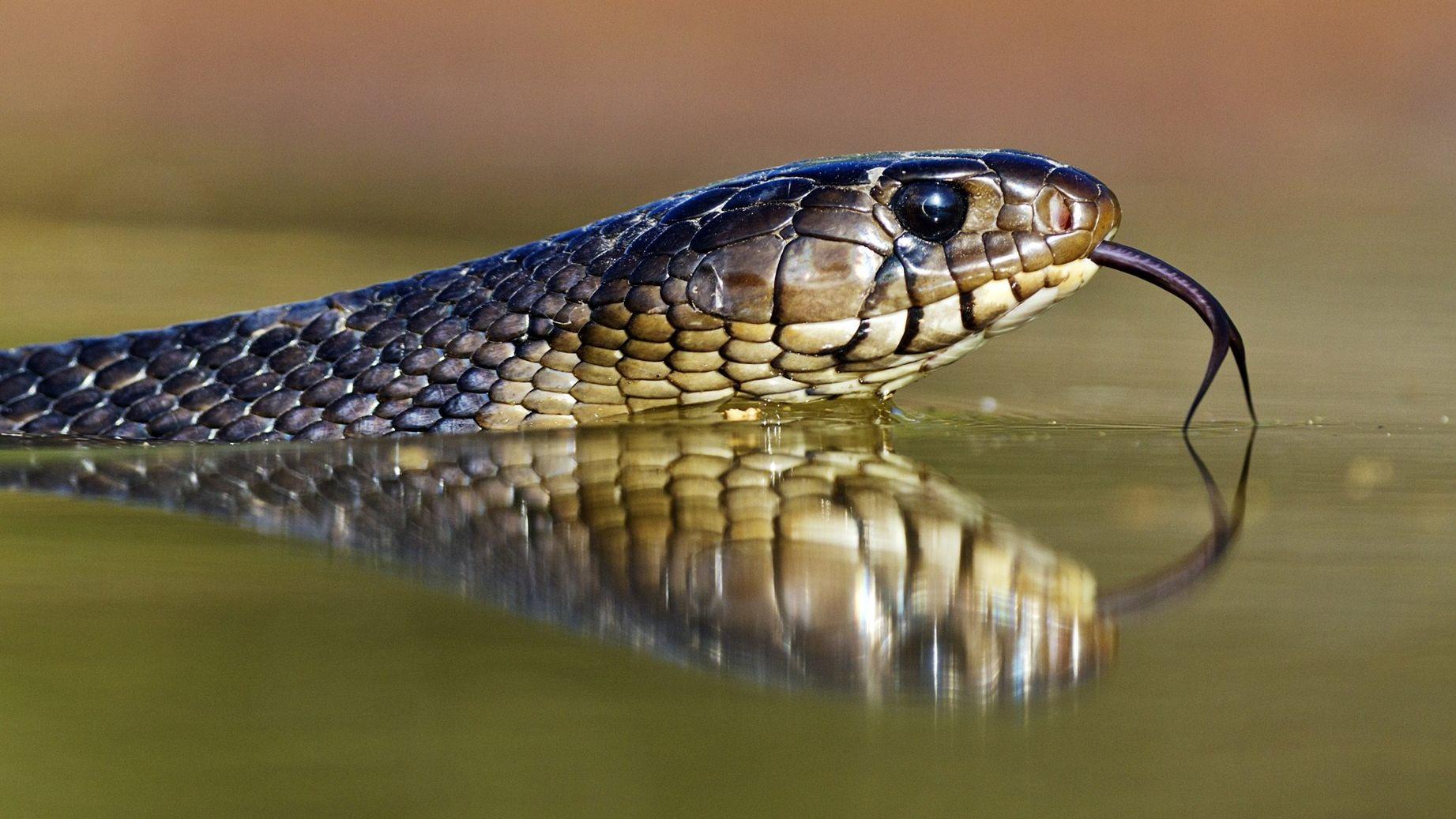 советское смотреть картинки змей что если они