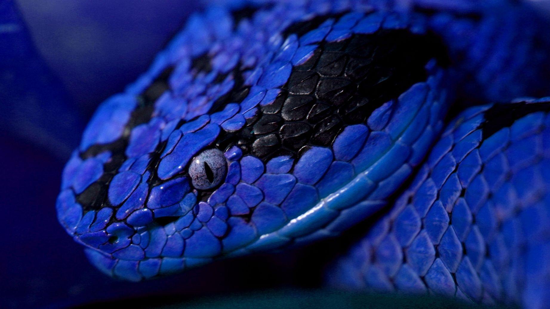 Змейка с поздравлениями