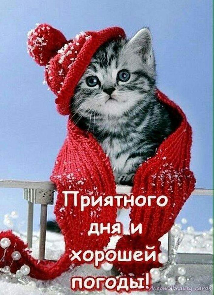 понизить кошки добрый день картинки надпись