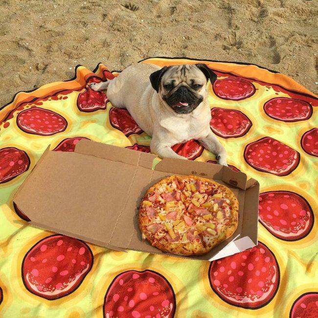 Картинки с роллами и пиццей прикольные