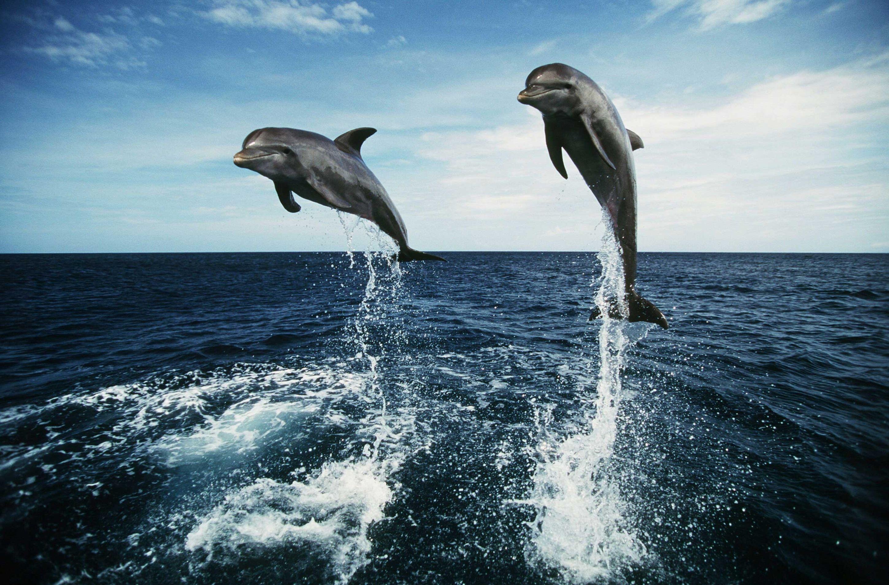 картинки рабочий стол тема дельфины рассказал
