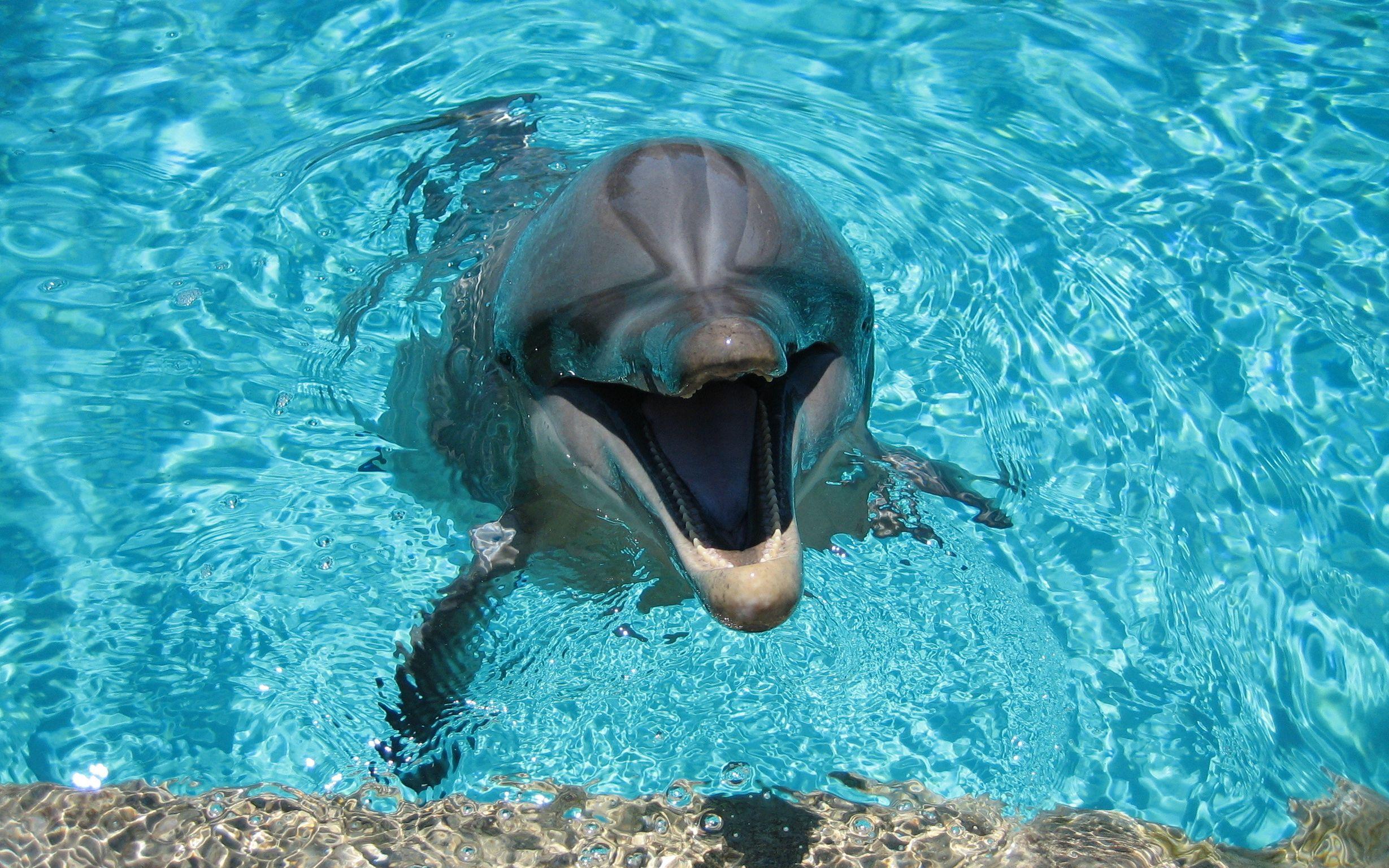 Фото дельфины обои