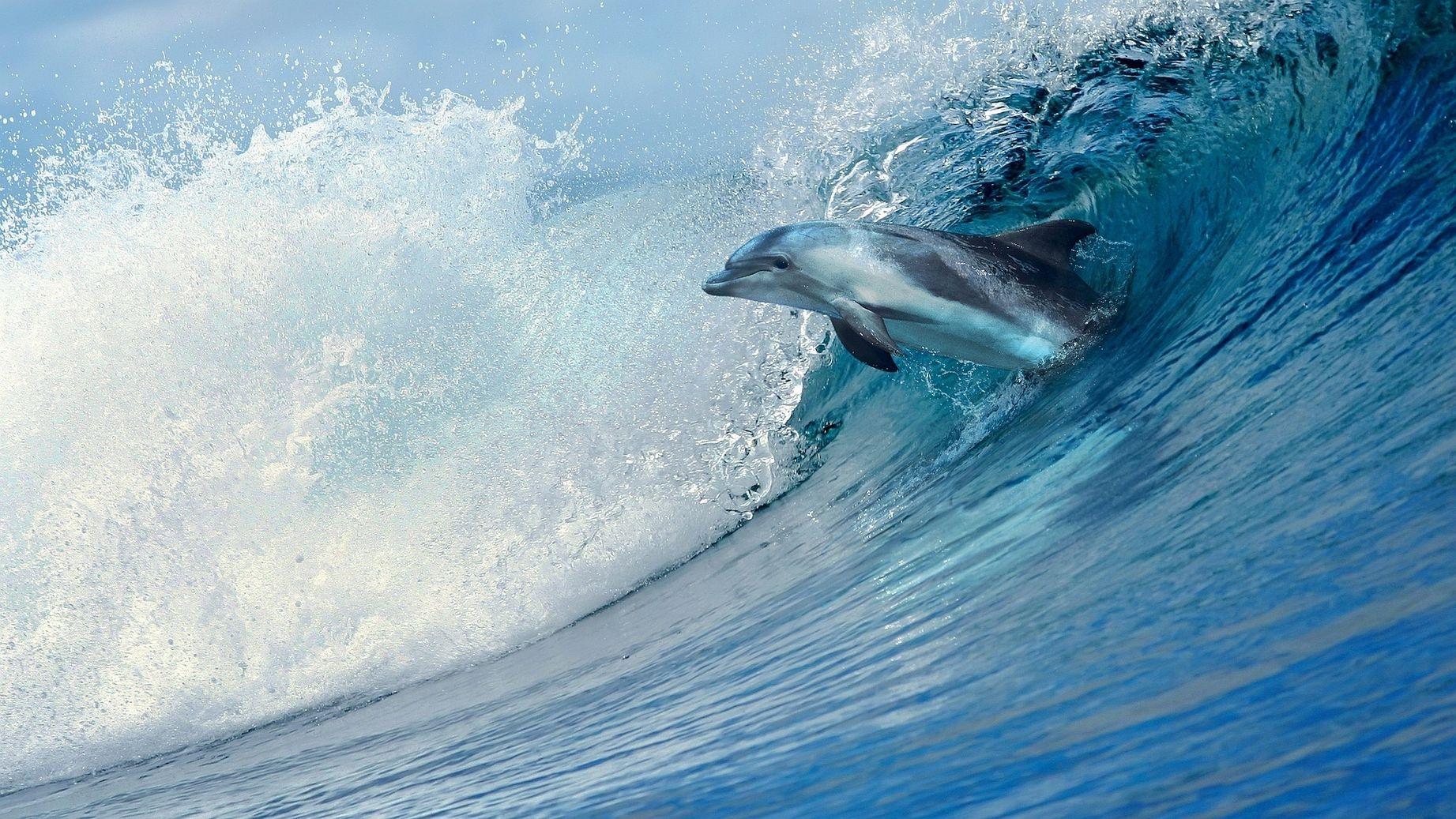 интернет с?й??ч?л?р?, красивые картинки про море и дельфинов одежда открытыми