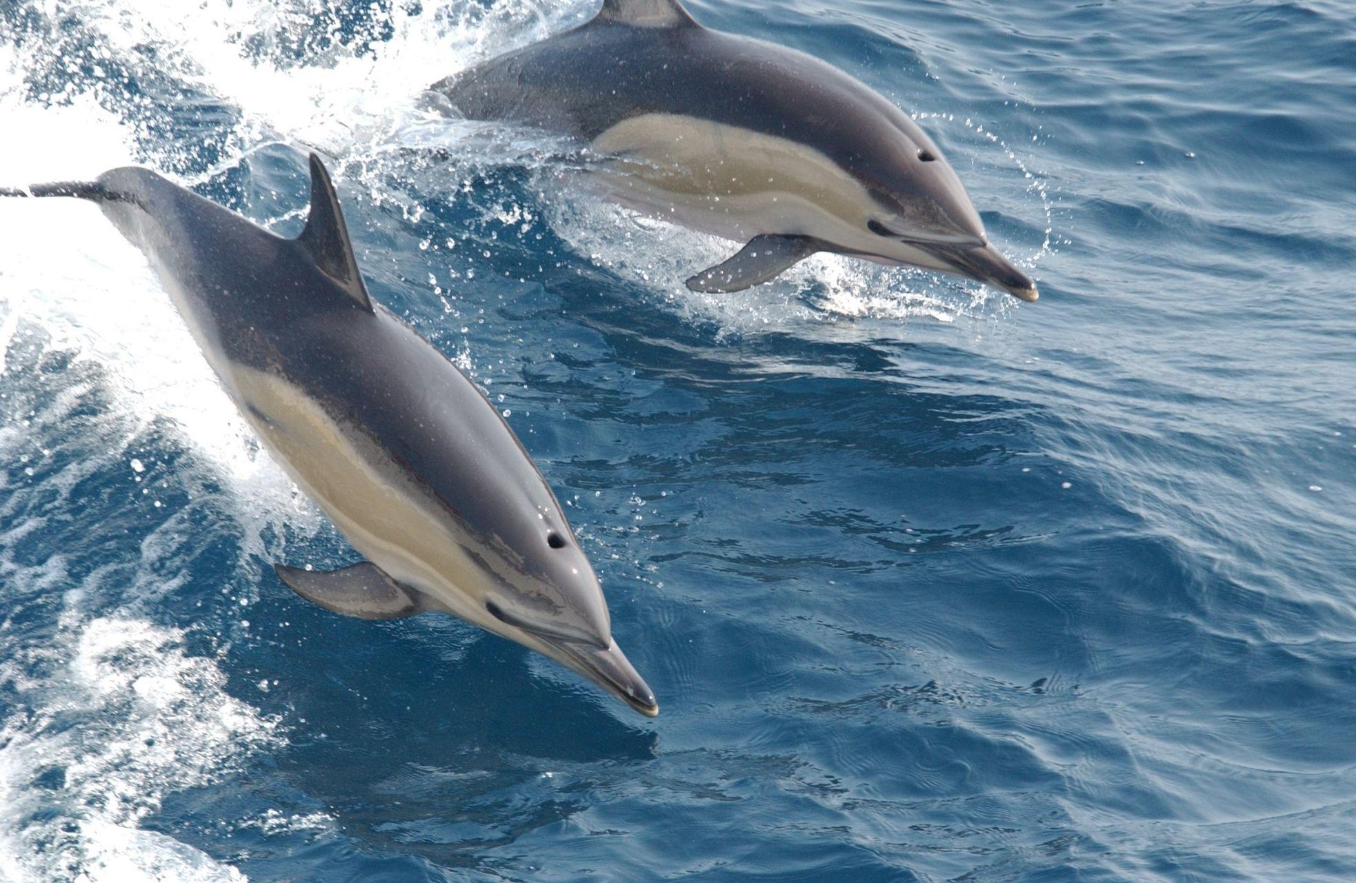 Фото разновидности дельфинов