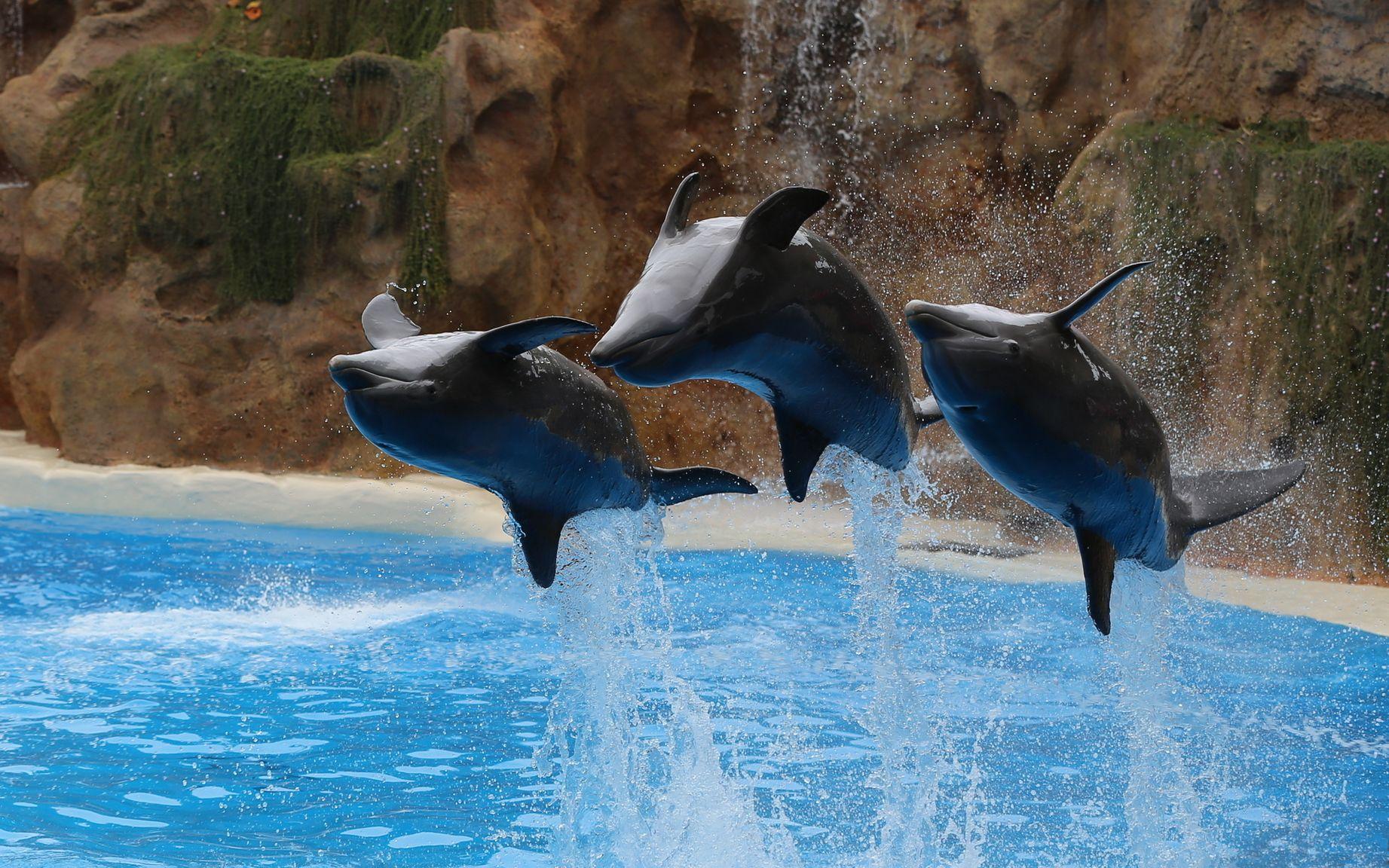 громкая слава высококачественные фотографии дельфинов можно