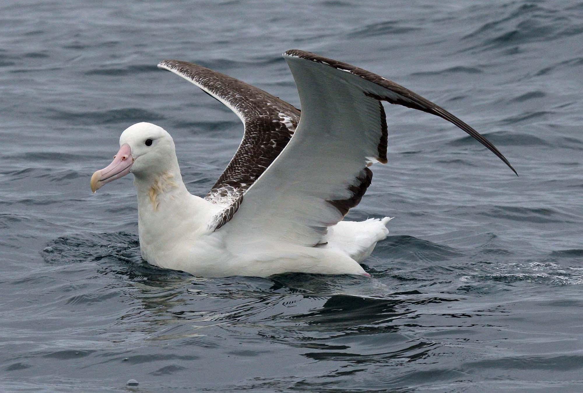 Хищные птицы липецкой области фото с названиями согласен