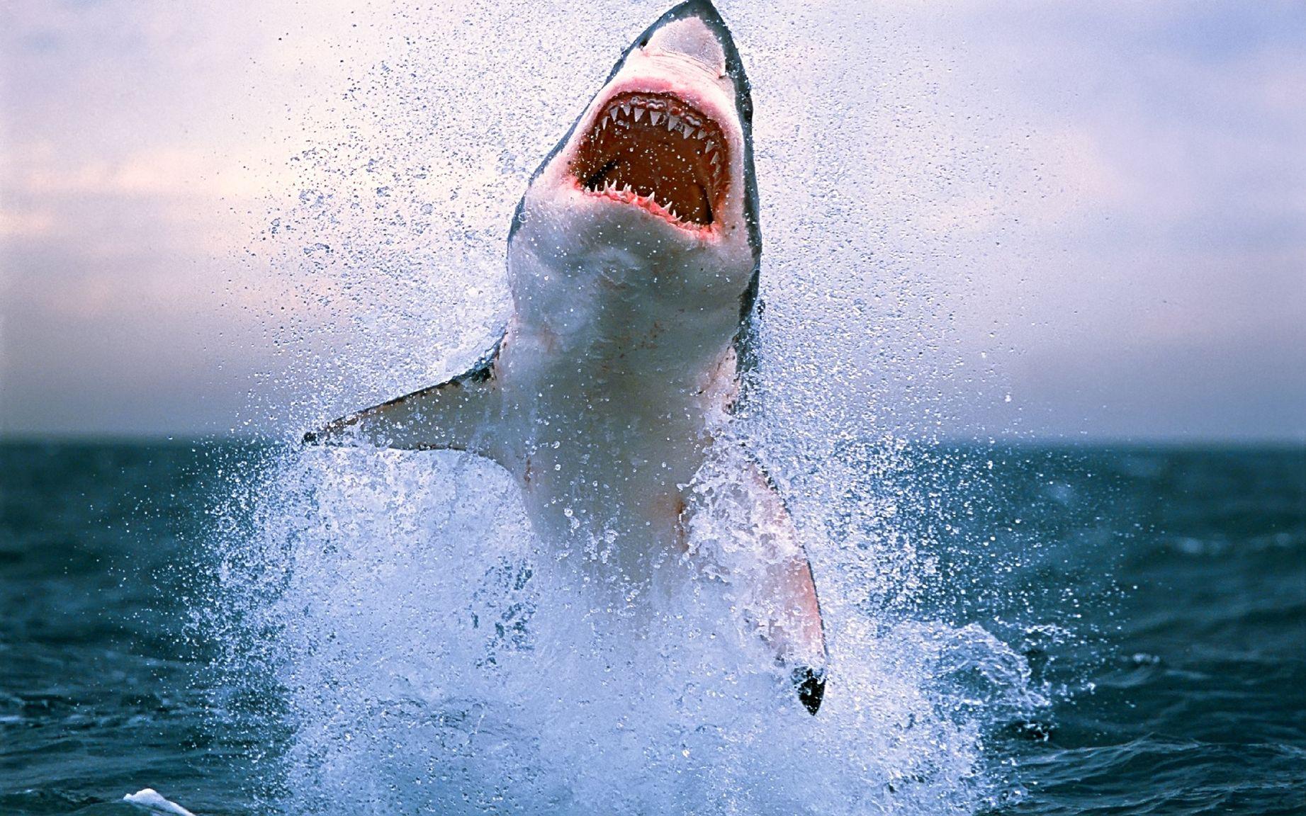 Снежная акула картинки