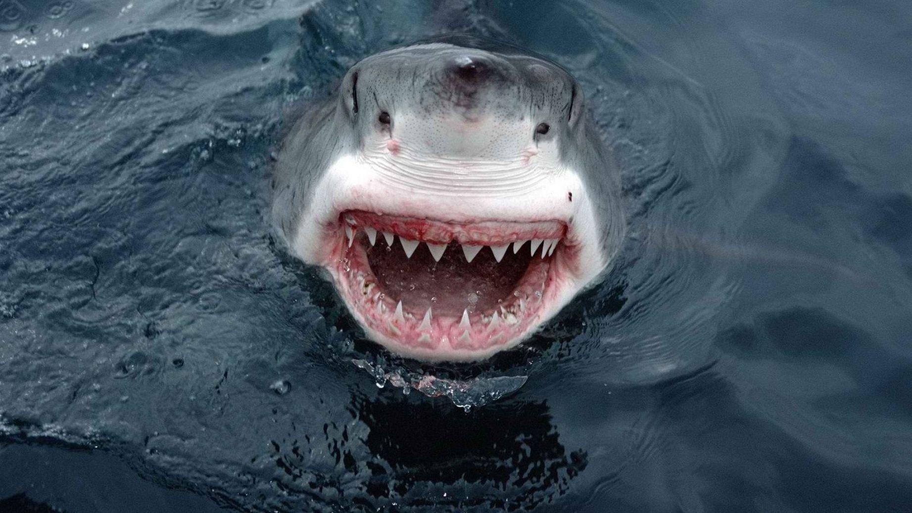 приколы про акул фото совершенно верно, майя
