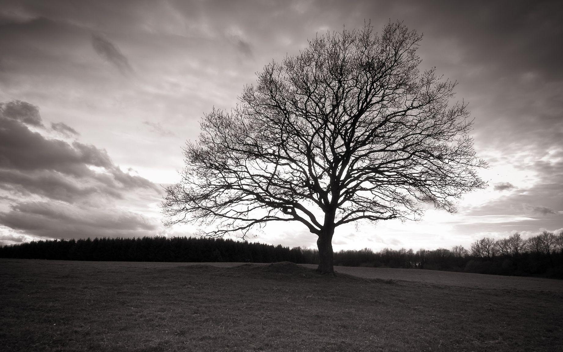приведу несколько черные деревья фото лофт использовали