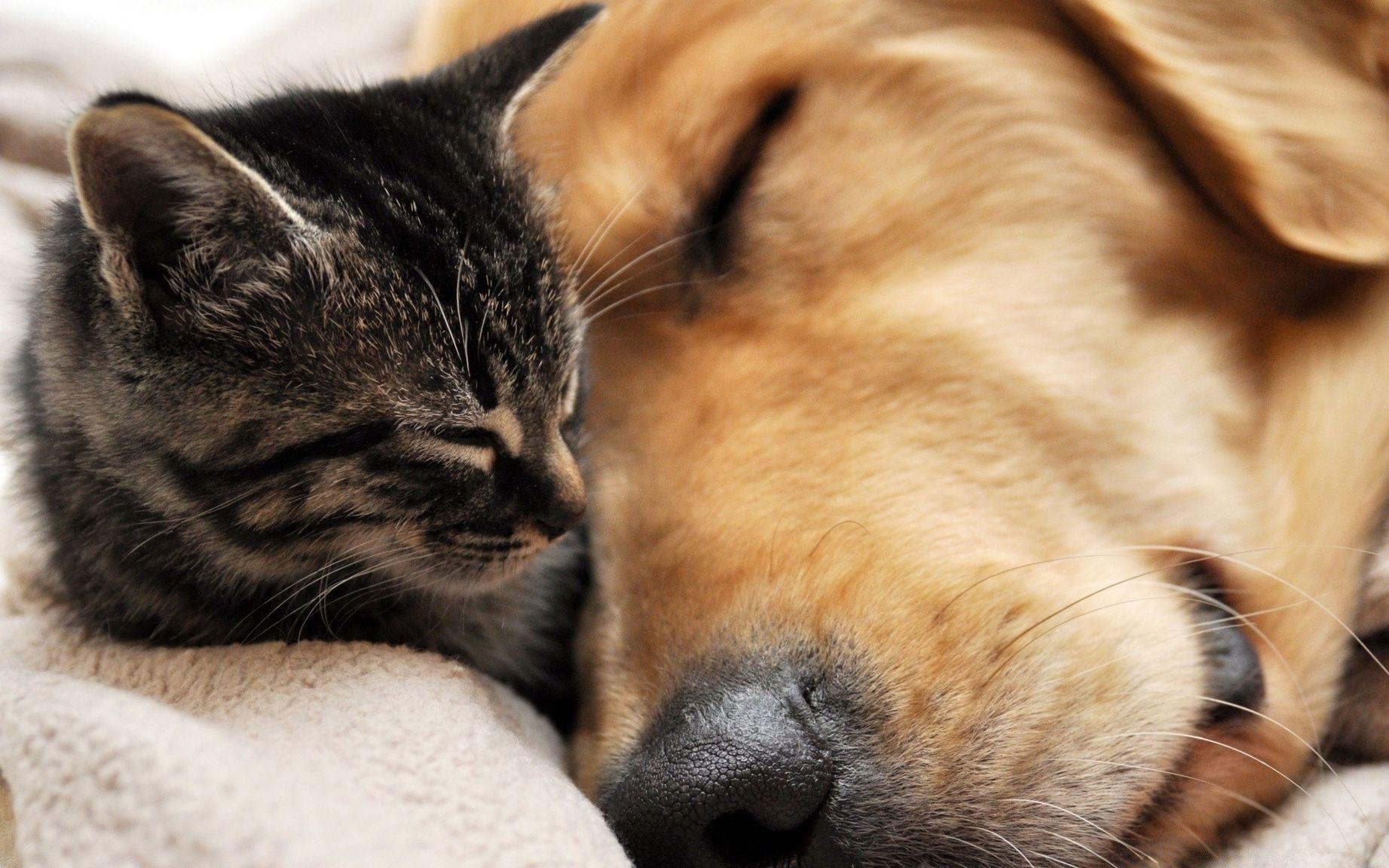 Картинка собака и кошка вместе
