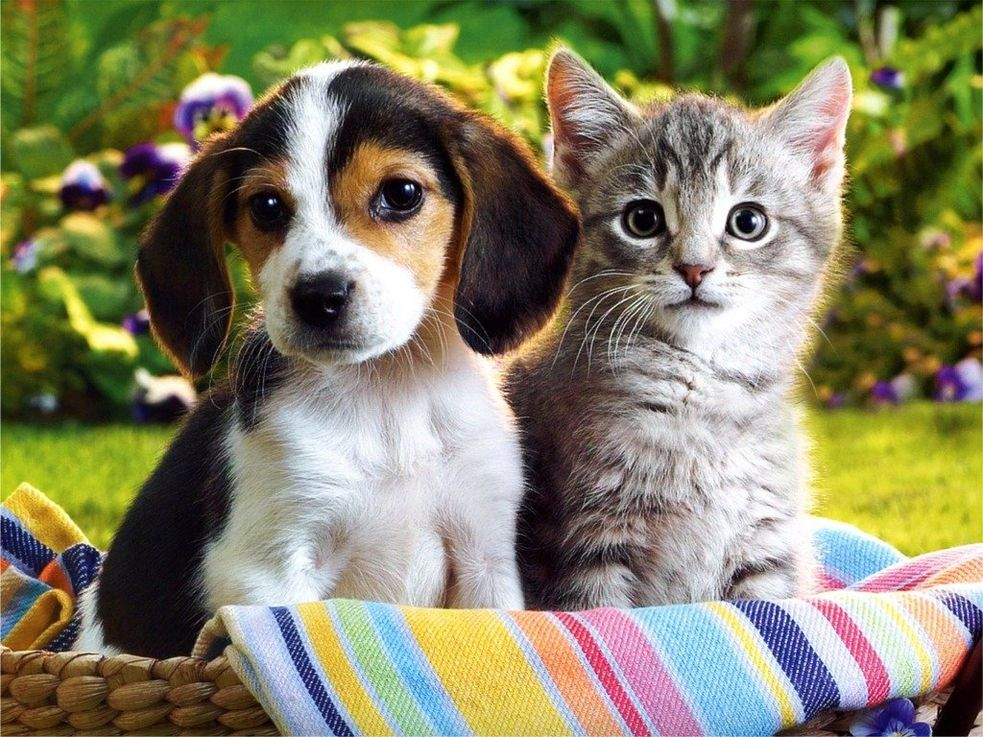 Красивые картинки кошек и собак (45 фото)
