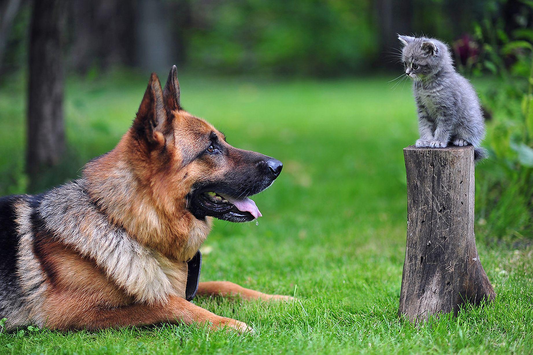 Красивые картинки с животными собаками