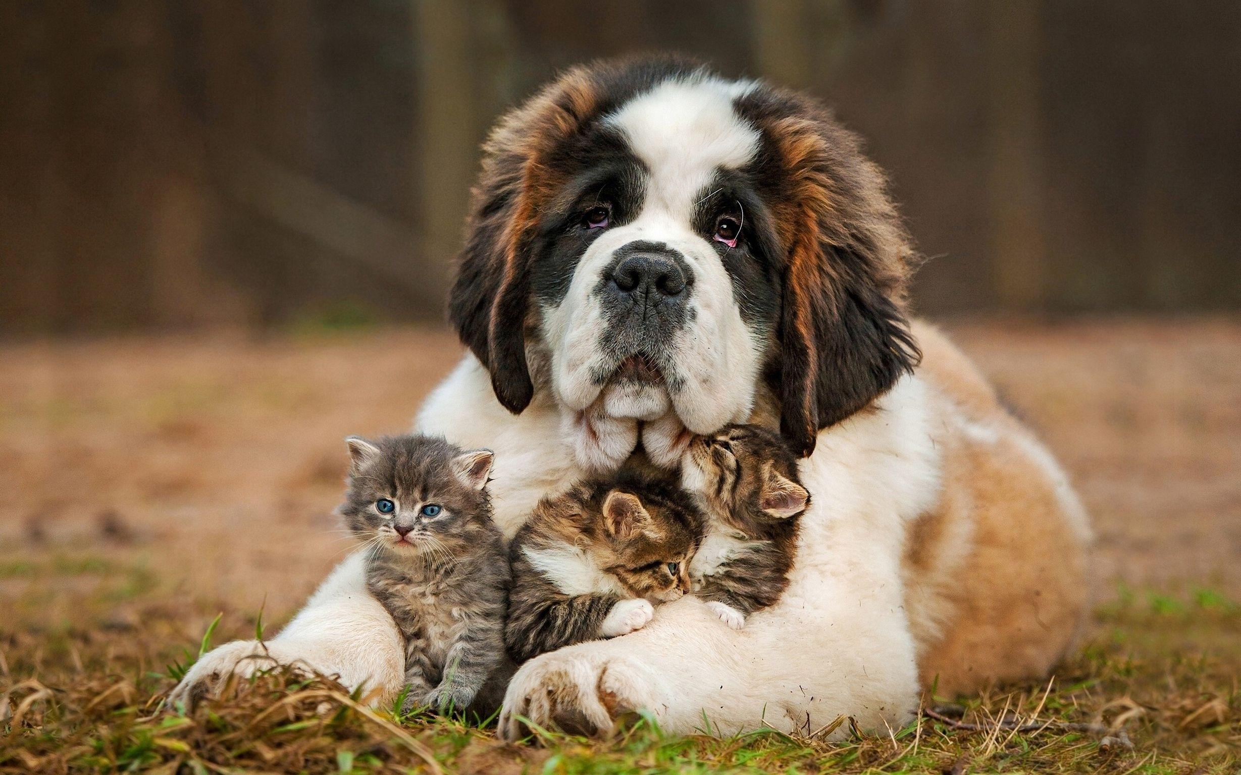 Картинки с животными все