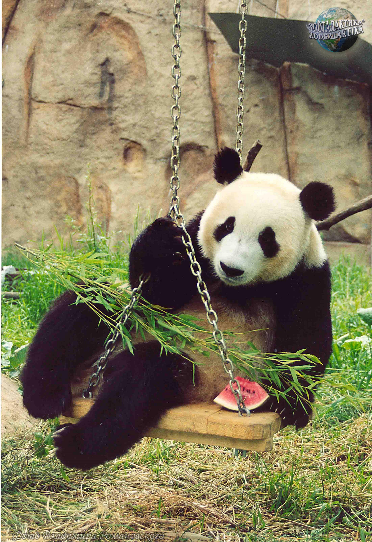 Панда и мишка картинки