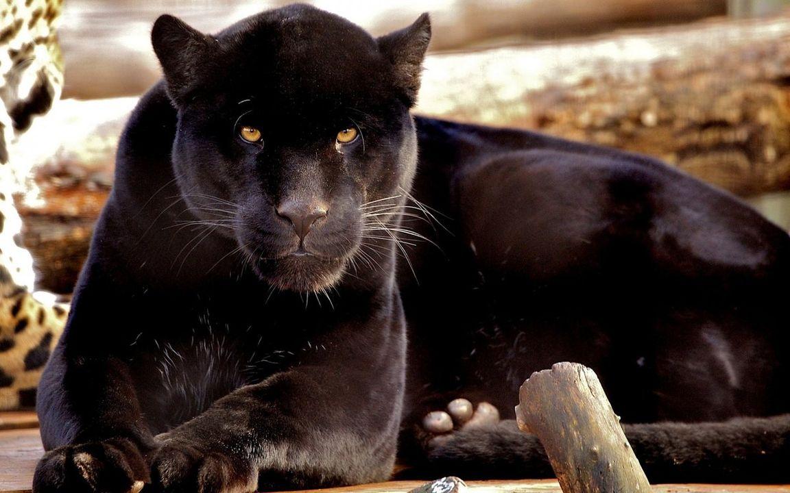 картинки про самых красивых животных четы