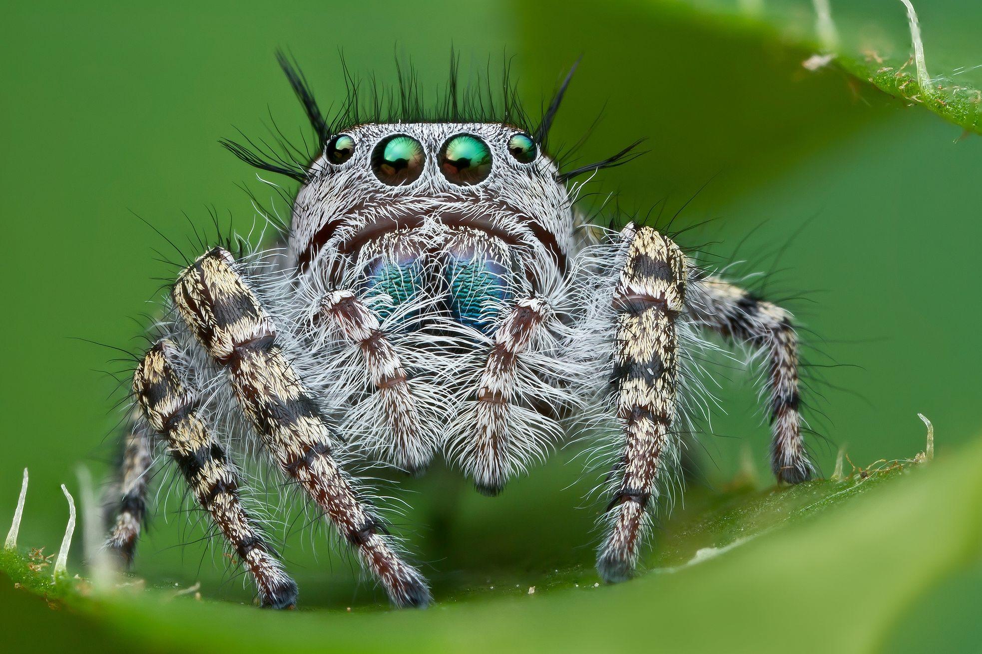 картинки о всяких пауков приобрести