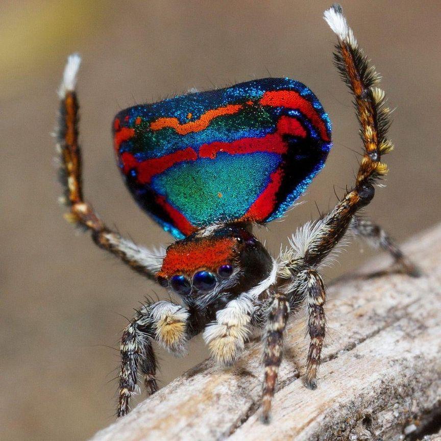 знаний картинки экзотический паук стеклянной стене, ощущаю