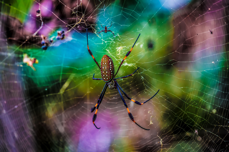 Картинки природы с пауками