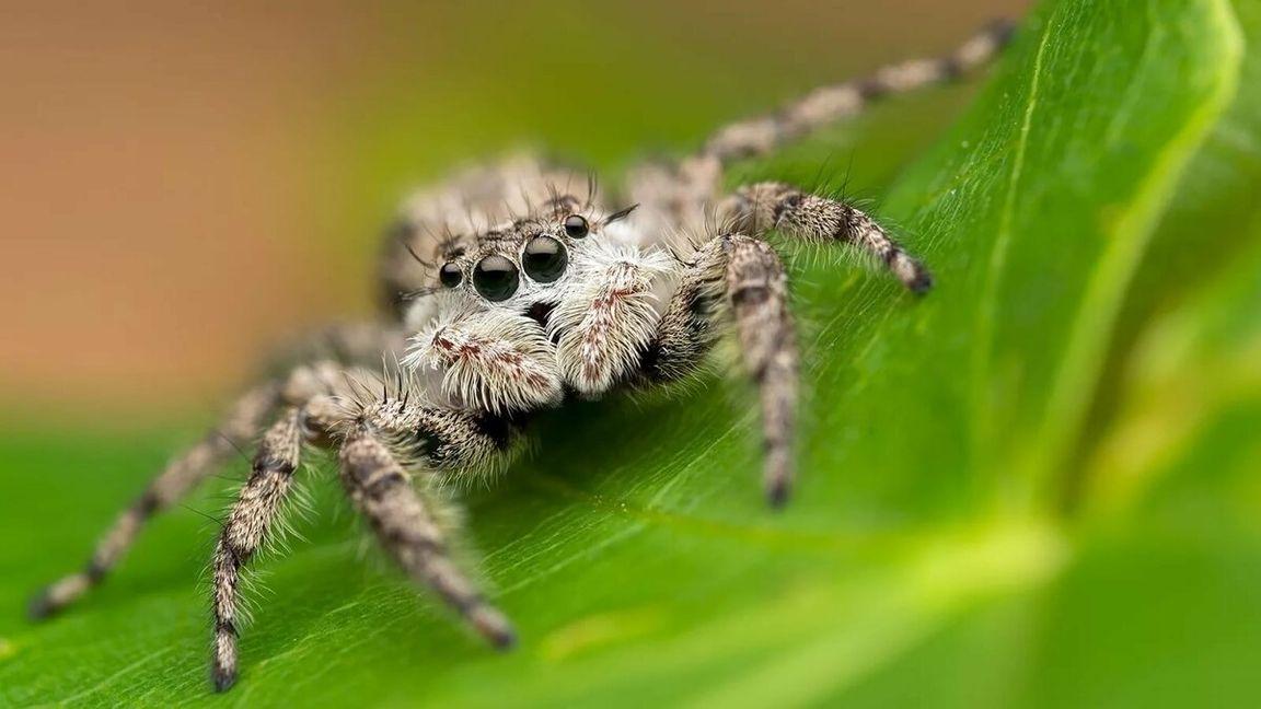 Какие пауки водятся в ростовской области фото районе