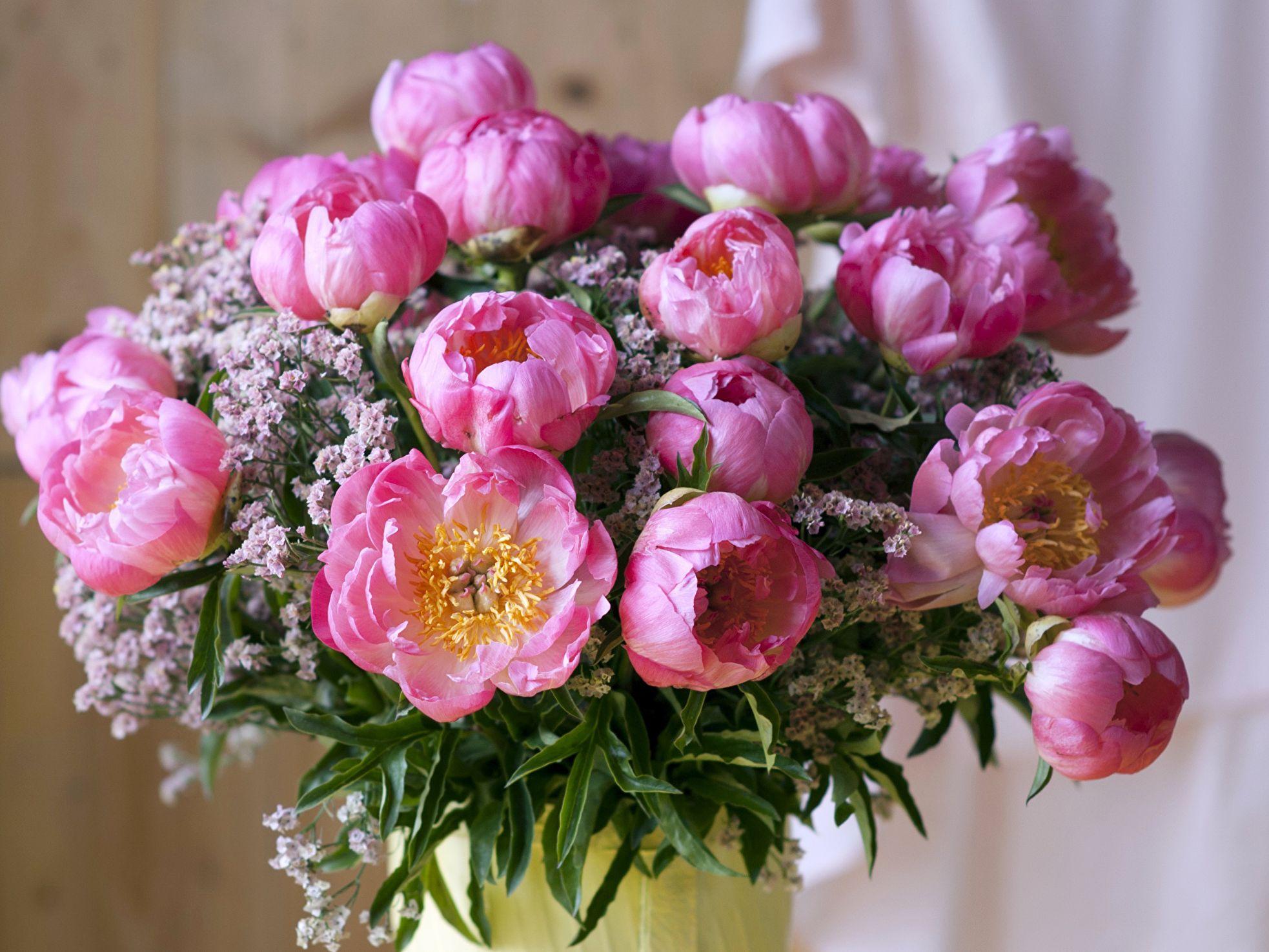 Цветы пионы фото красивые картинки особо