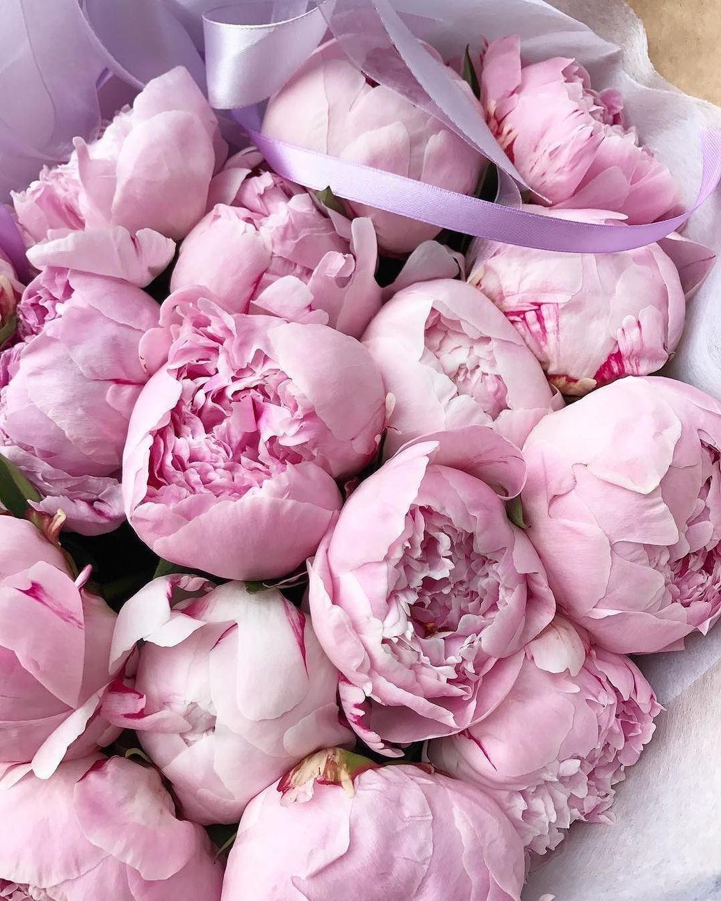 Цветы пионы фото красивые картинки большой шарф