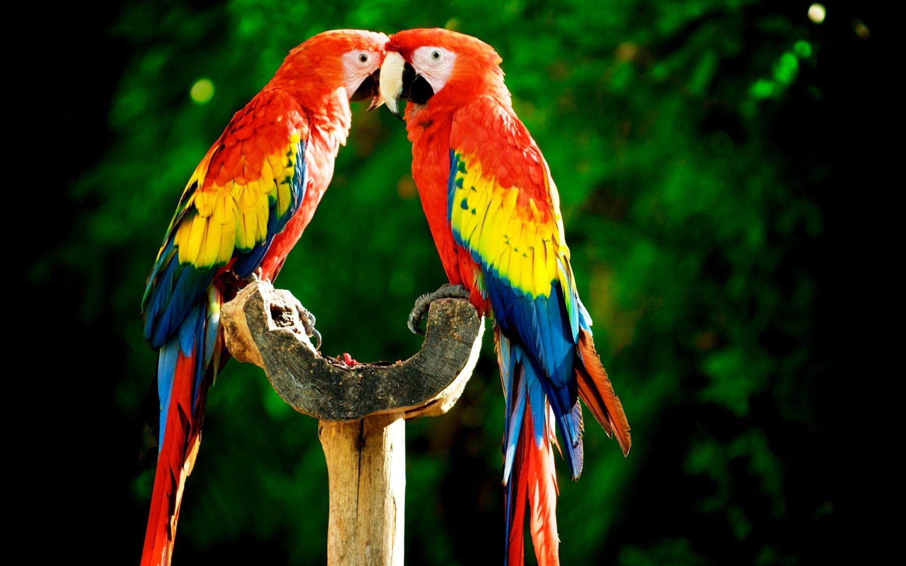 Картинки попугаев красивые