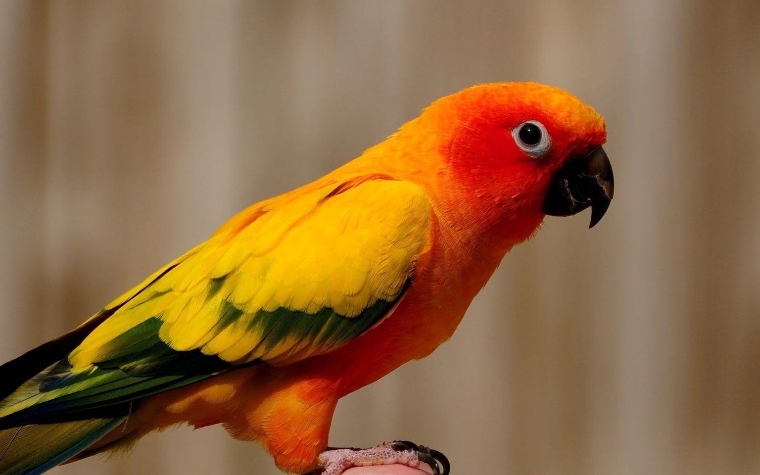 Крутые картинки, картинка попугай