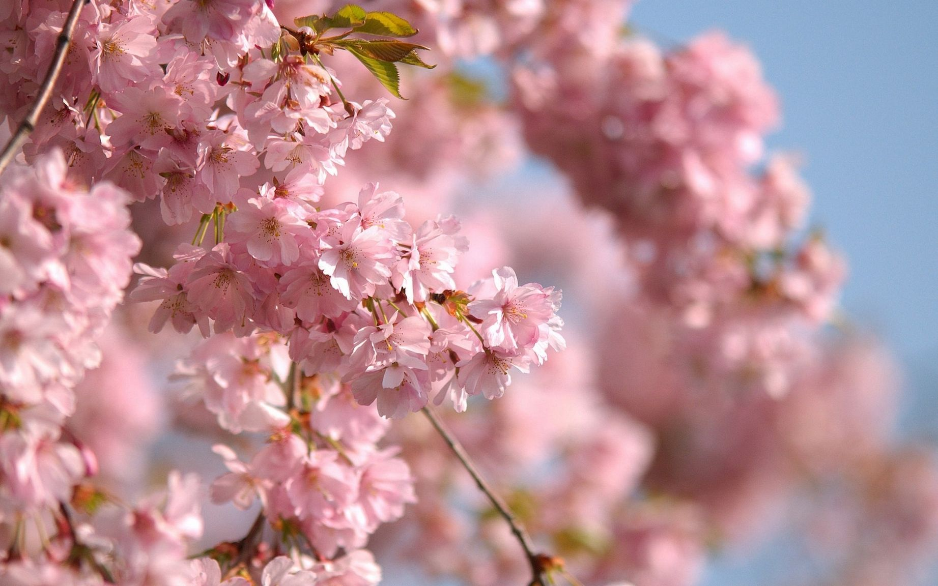 правильно весна картинки красивые розовые обнаружение