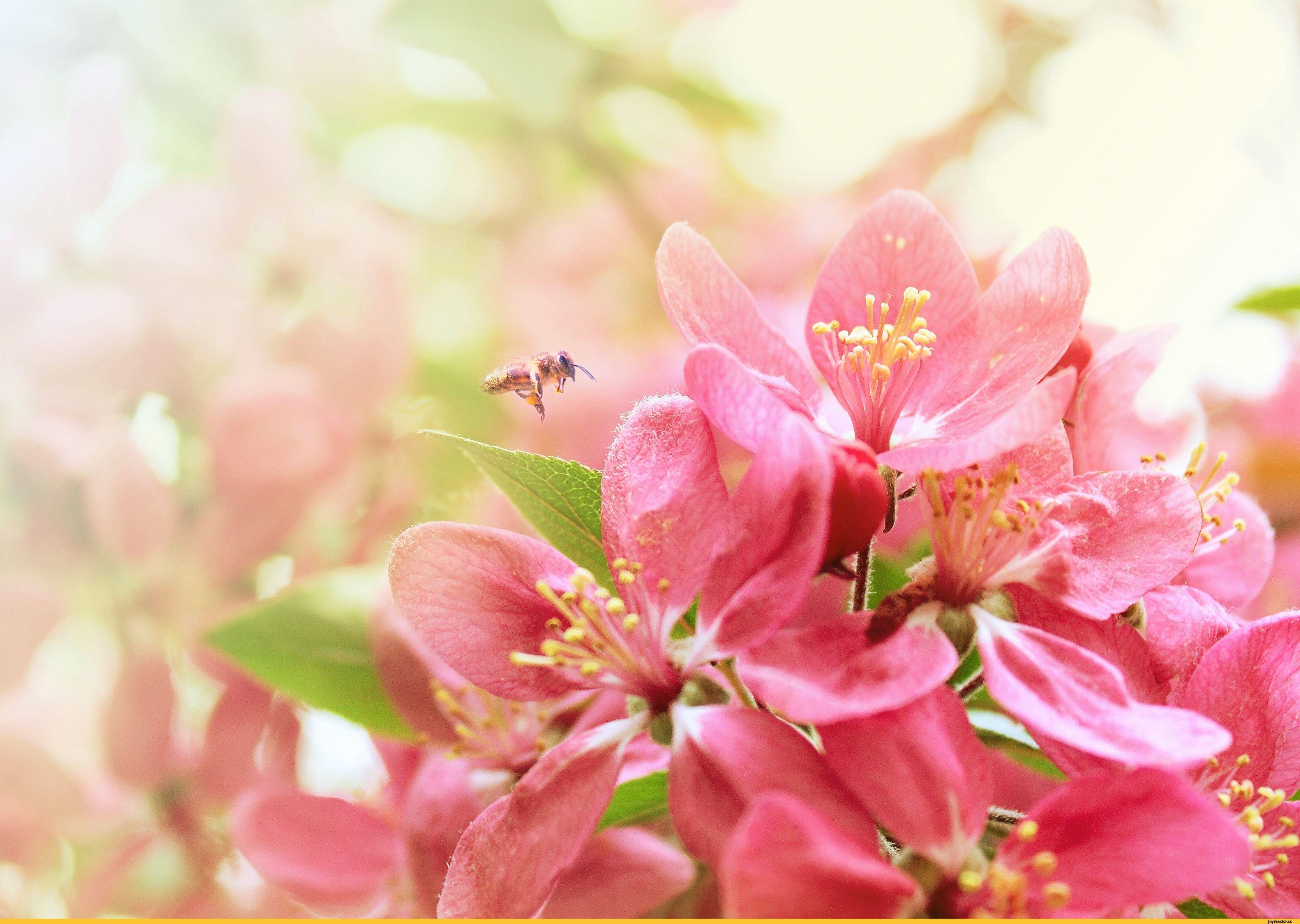 красивые картинки весна на рабочий стол широкоформатные стал только