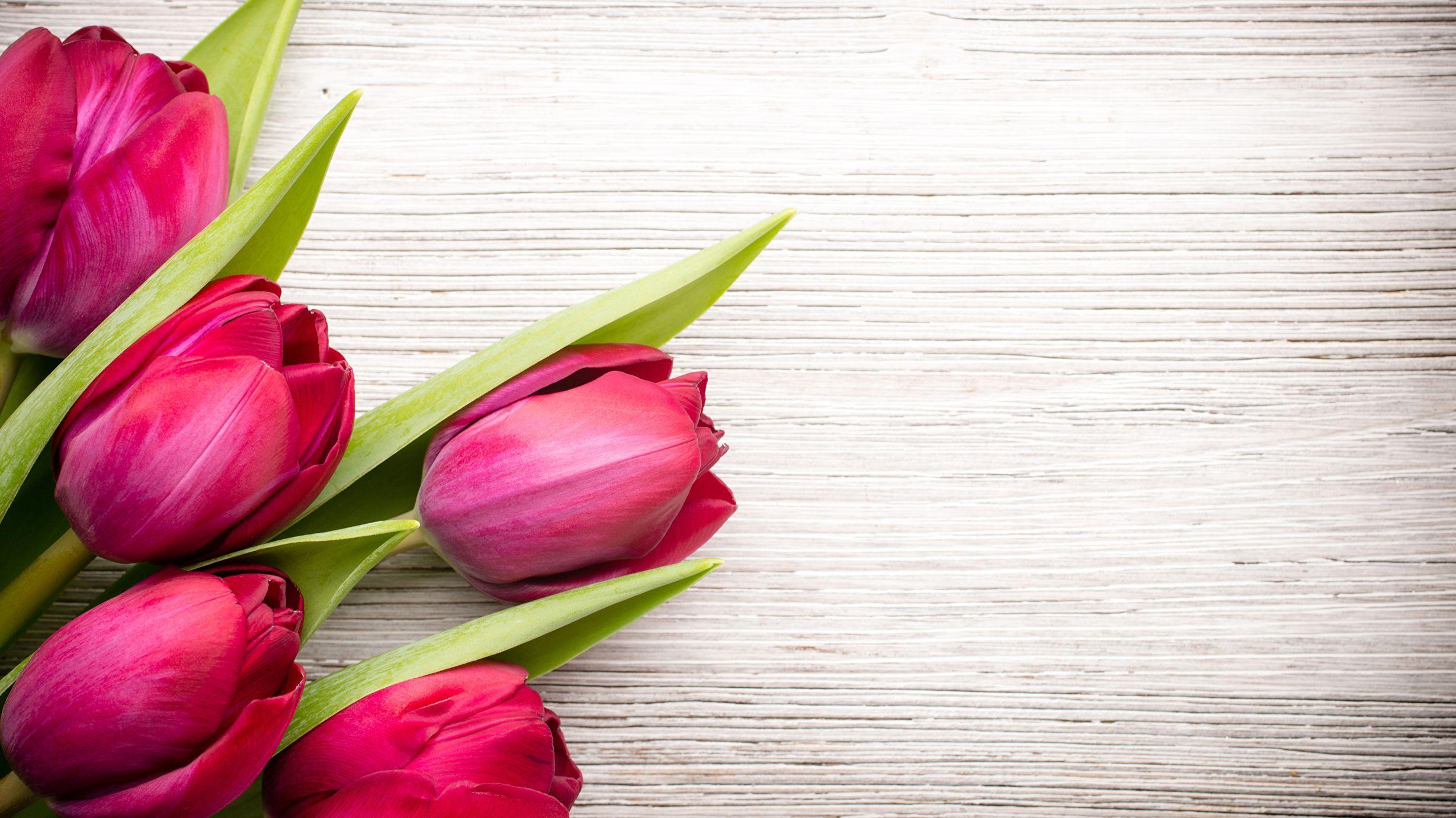 Картинки тюльпаны красивые на рабочий стол