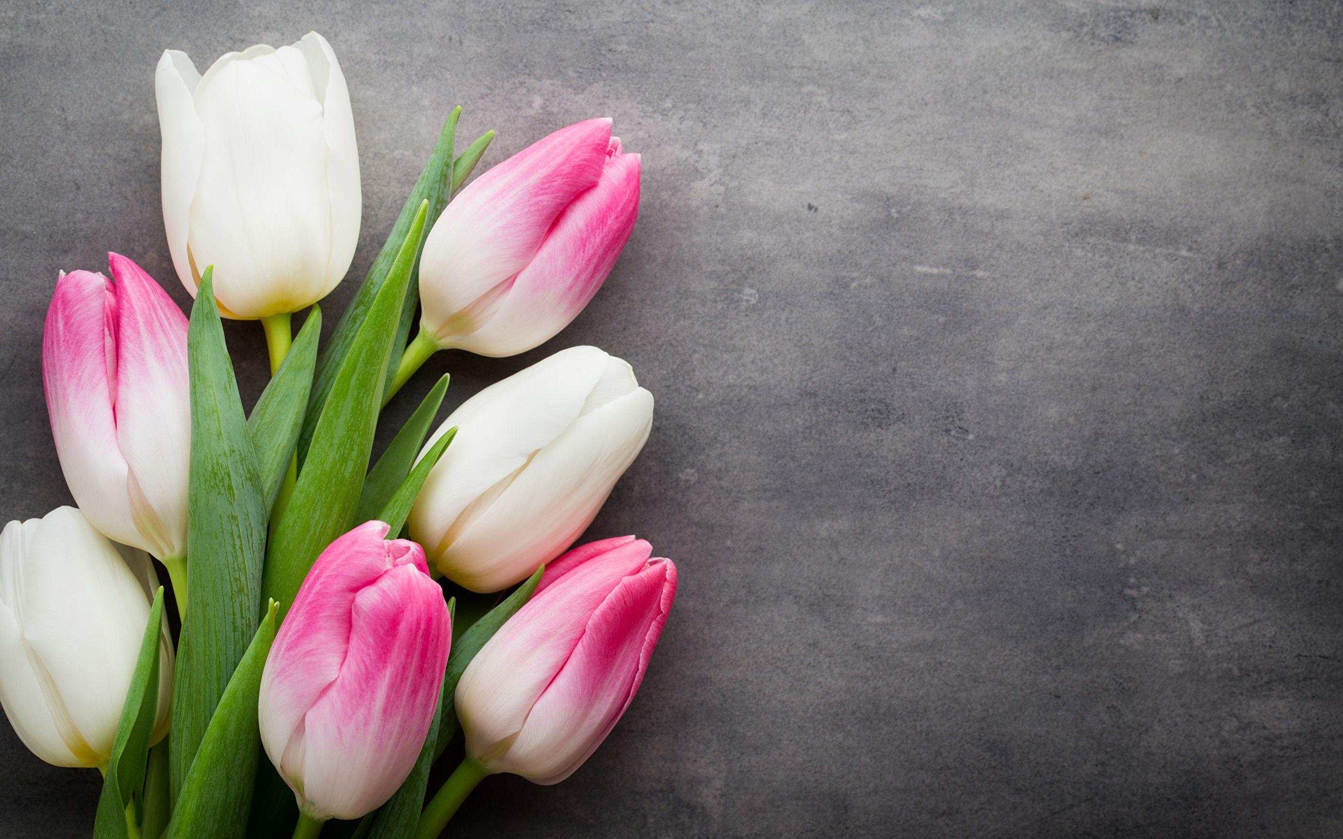 Открытки красивые цветы тюльпаны, картинка цветами музыкальные