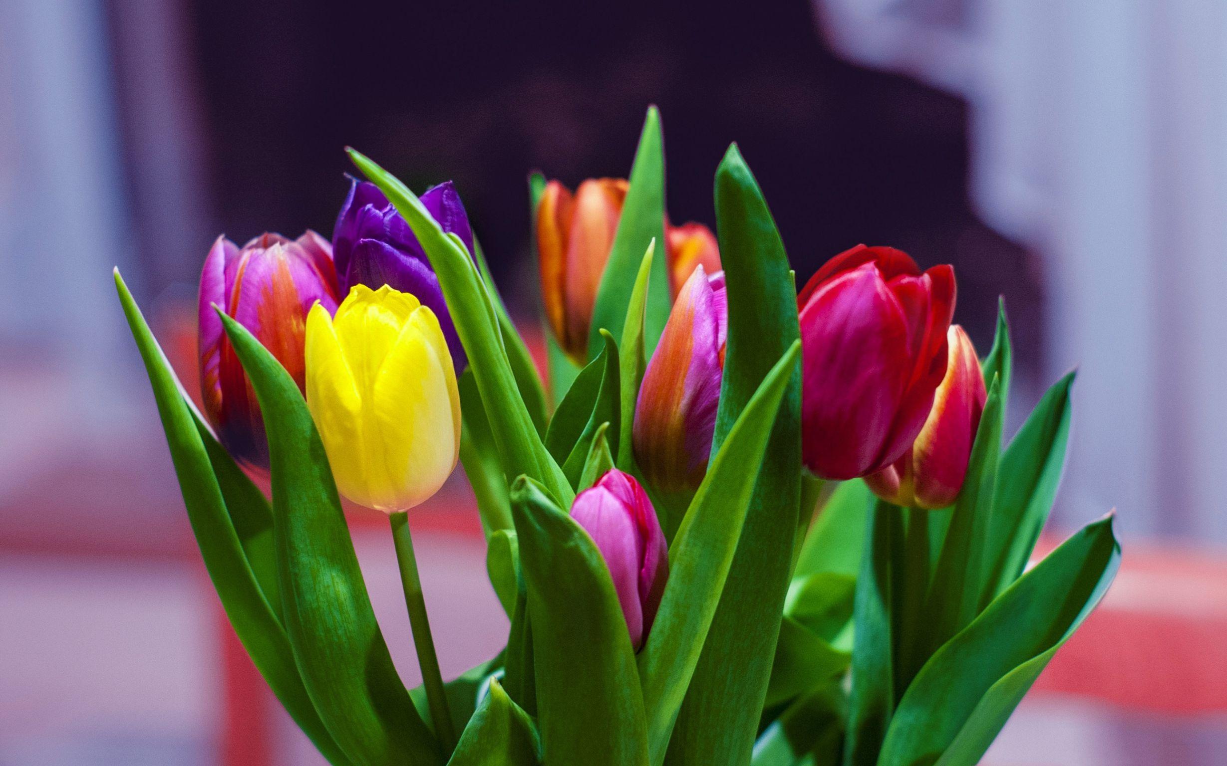 Фото картинки тюльпанов, днем победы открыткой