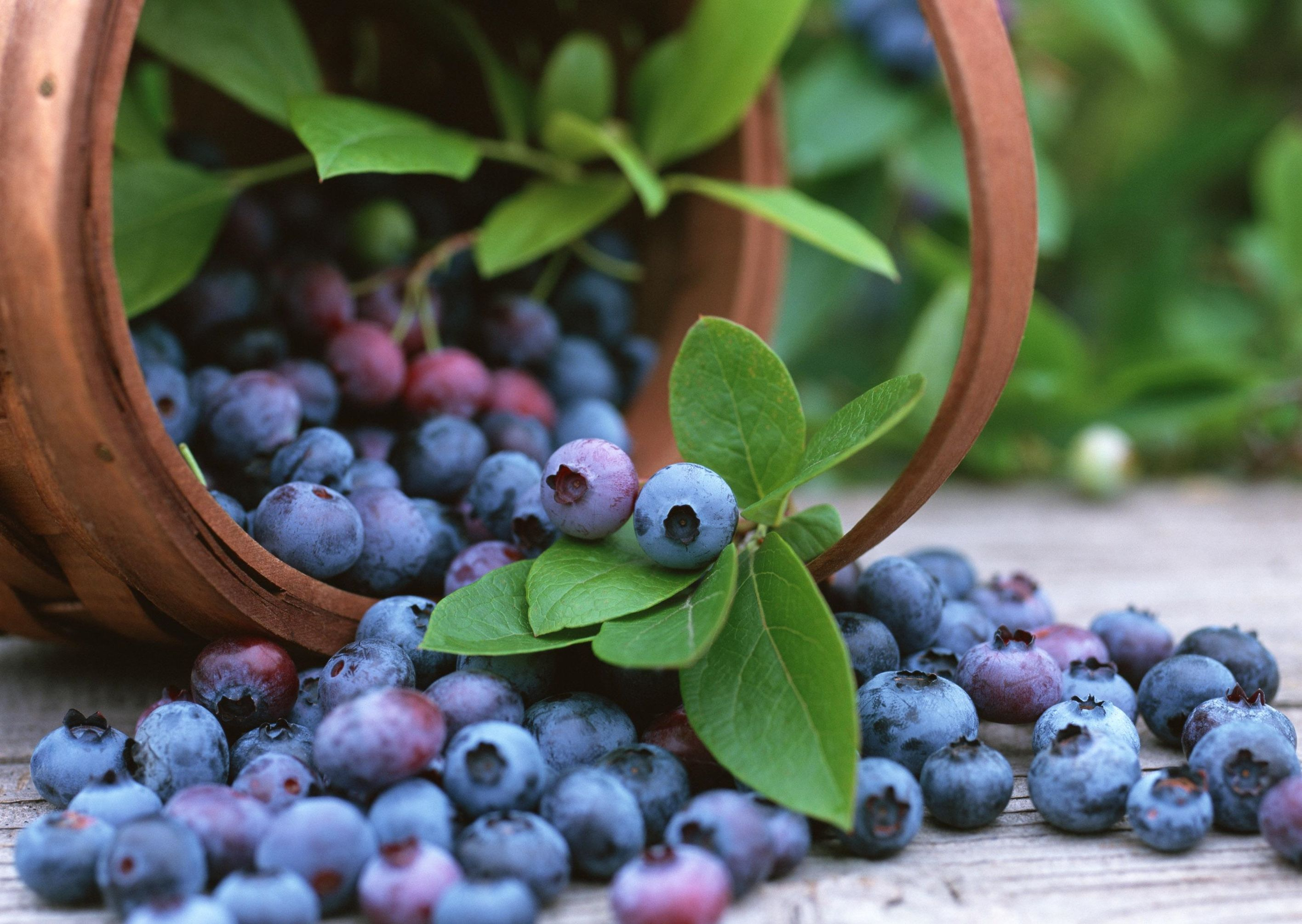 картинки для рабочего стола лесные ягоды