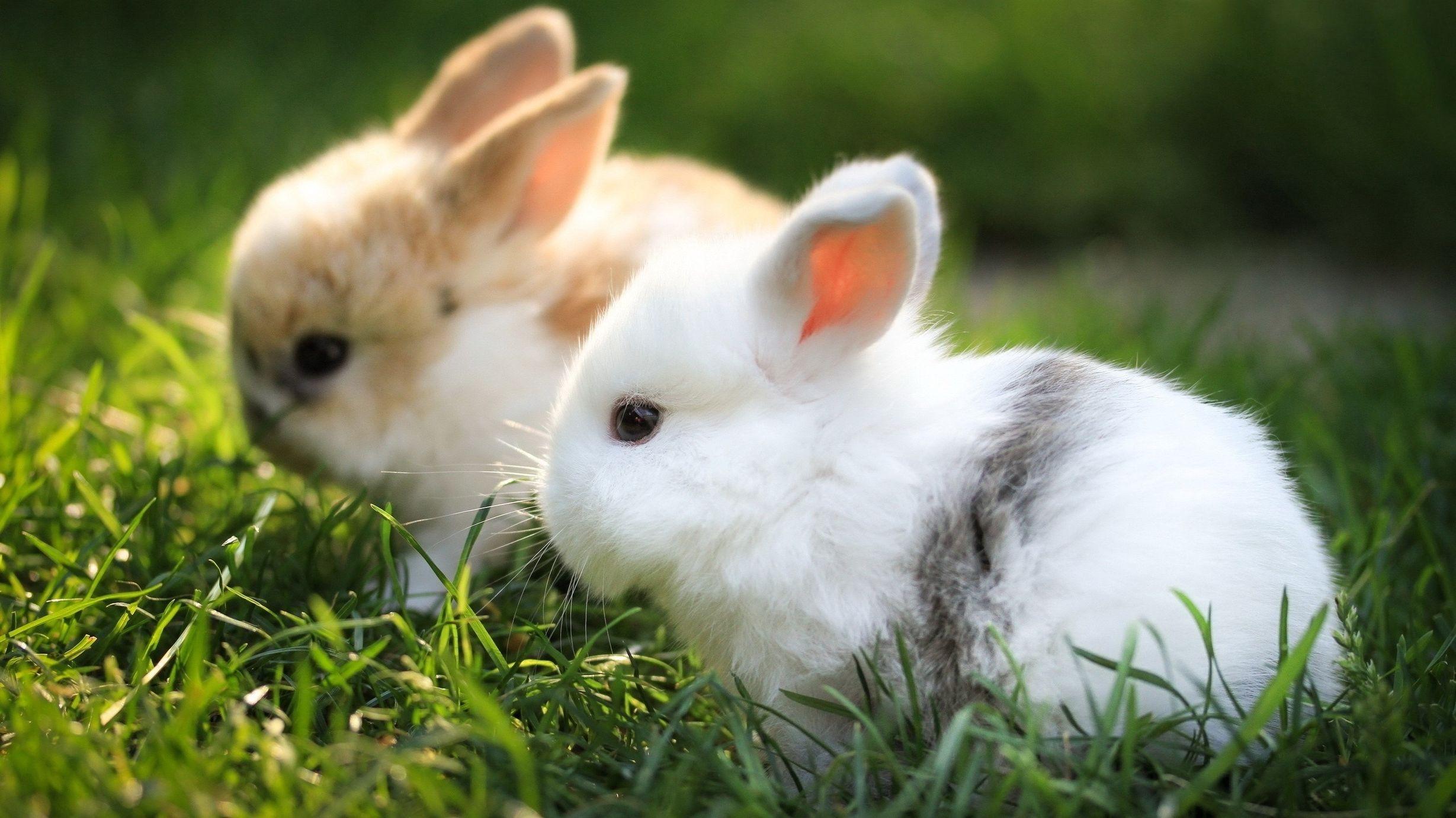 красивый кролик фото ноги бёдра