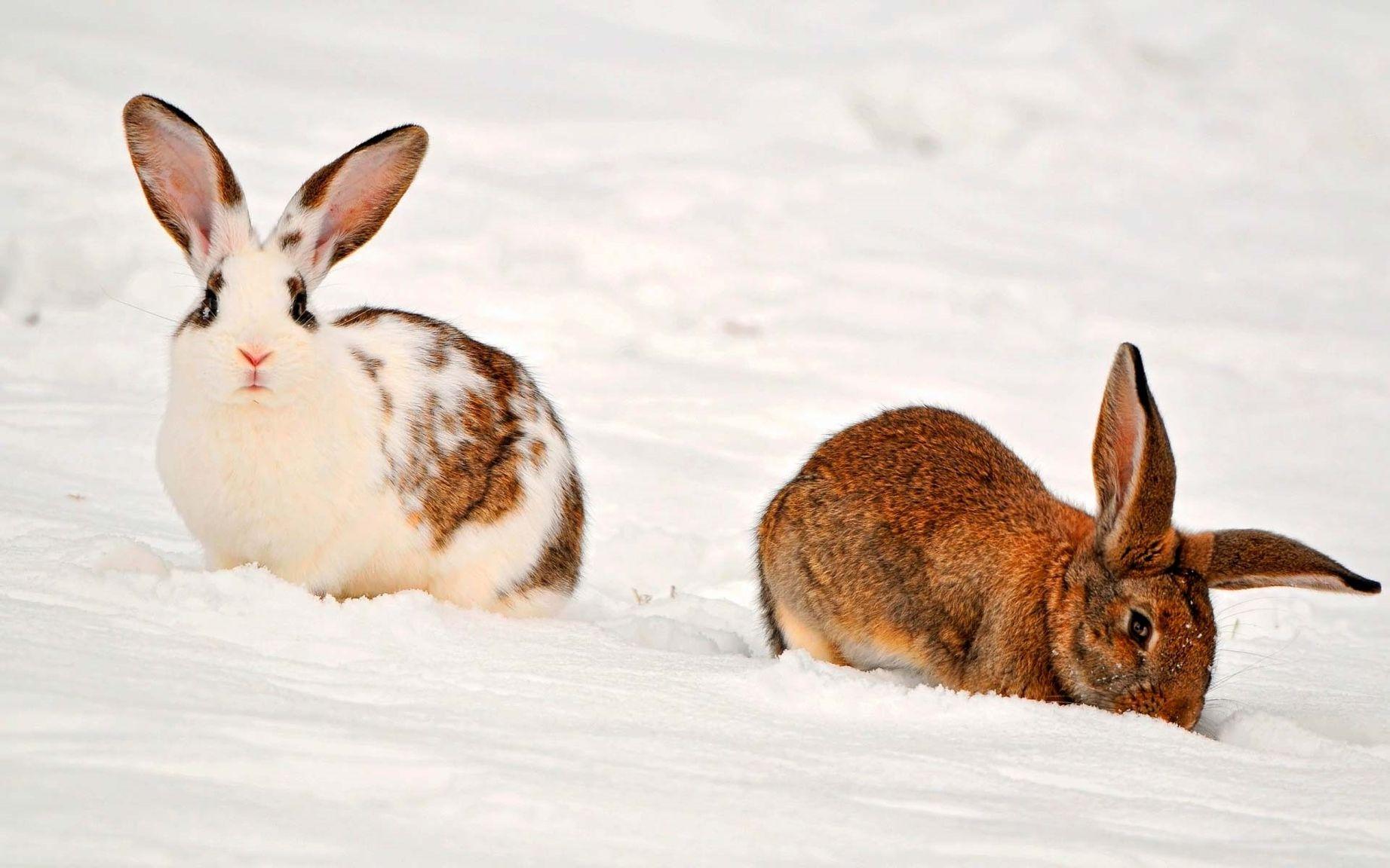 это красивые картинки зайца зимой зачёт