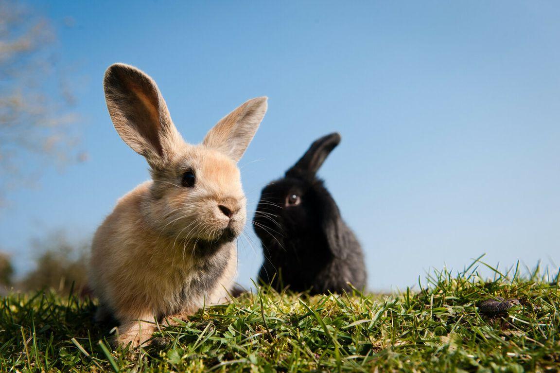 картинка зайца самая лучшая простая