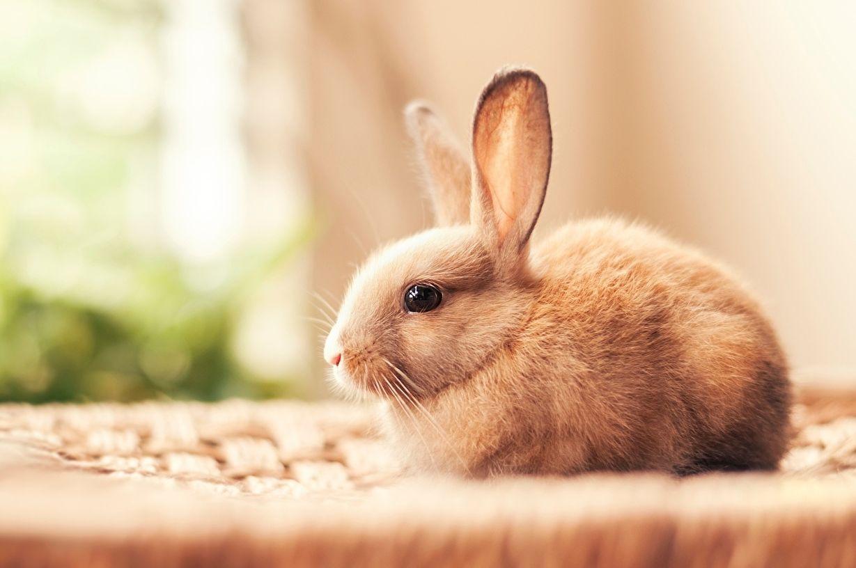 красивый кролик фото возможности