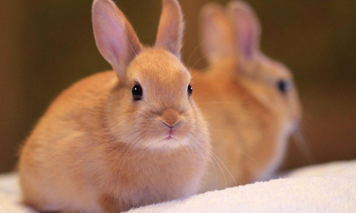 живые картинки про кроликов кухне
