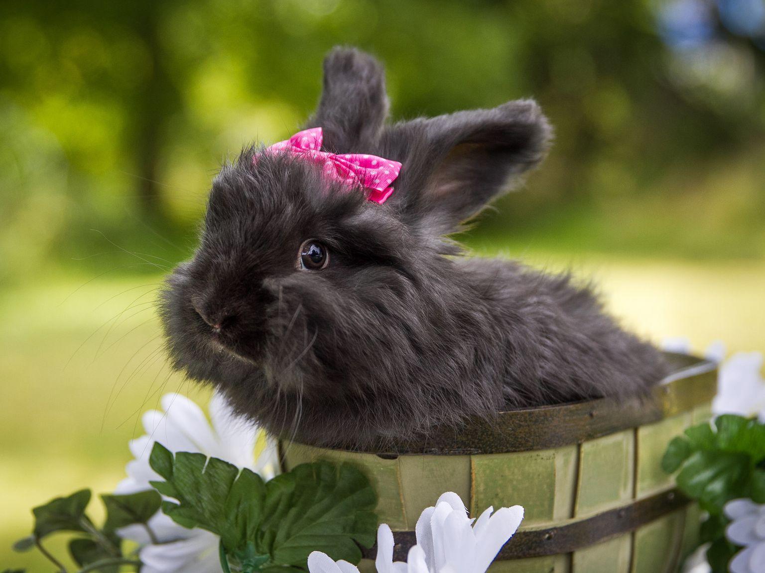 красивый кролик фото тому же