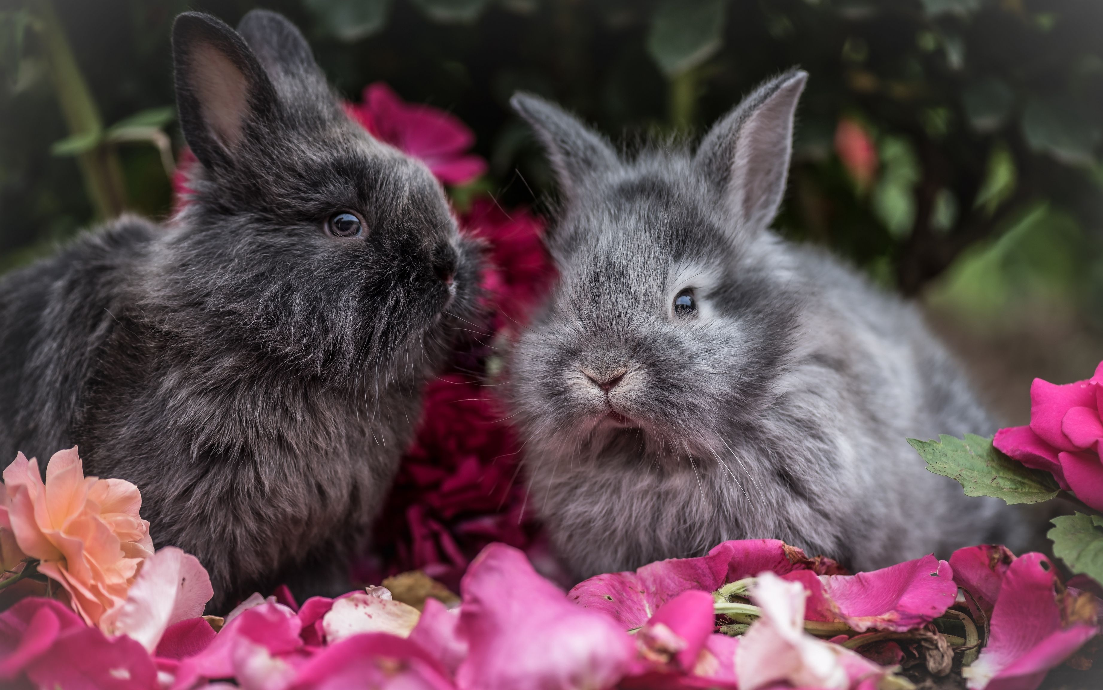требующая красивые открытки фото зайцы кролики сразу