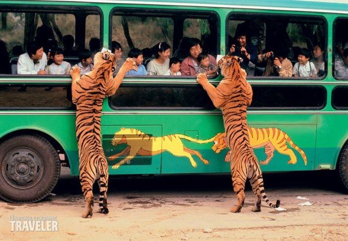 портер, например, прикольные фото туристов автобус владивостоке неравнодушные