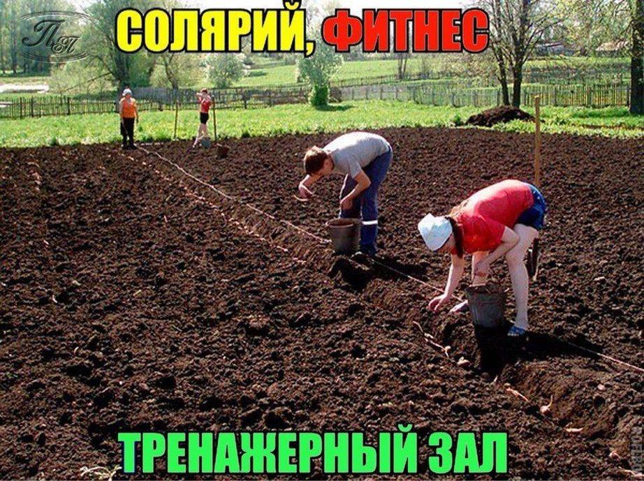 Огородные картинки смешные