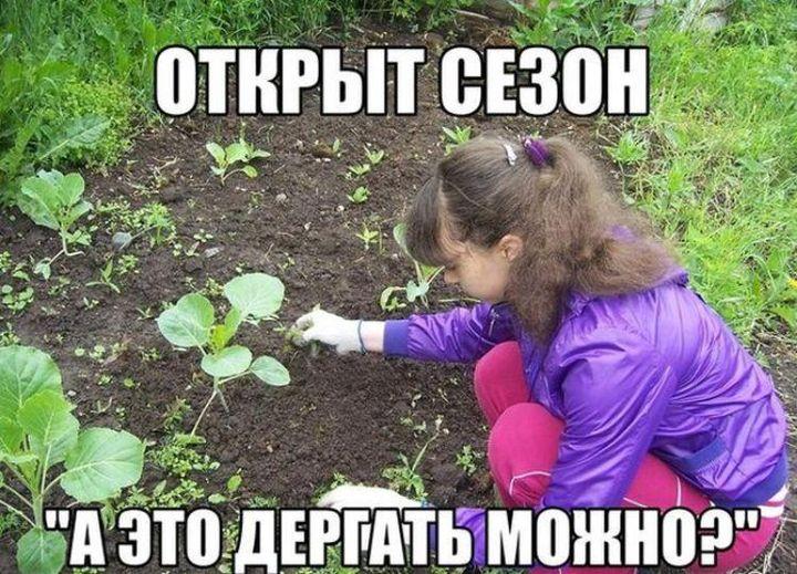смешные картинки про огород какой ноутбук или