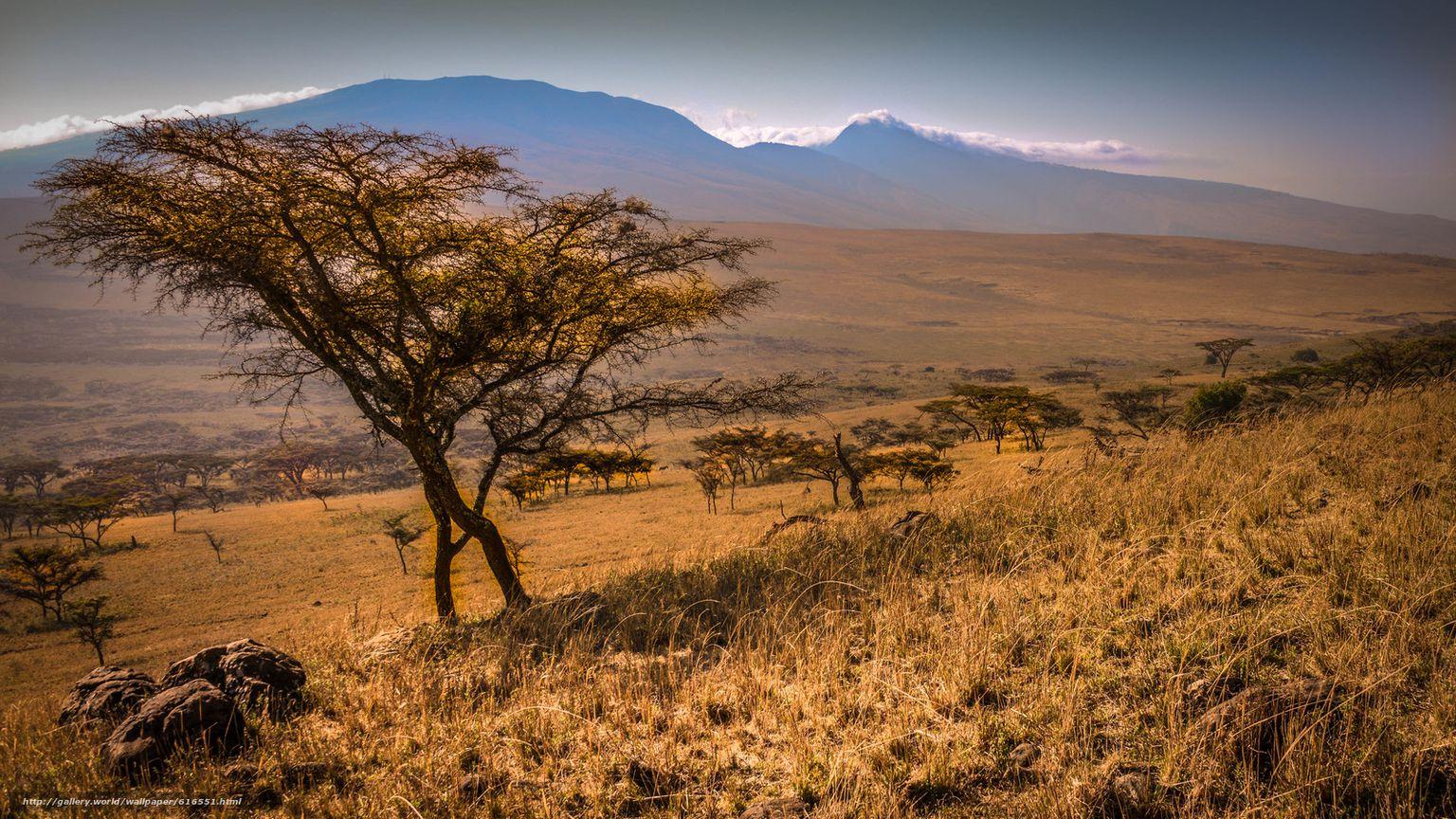 изображением африканские пейзажи в картинках про подходящие ингредиенты