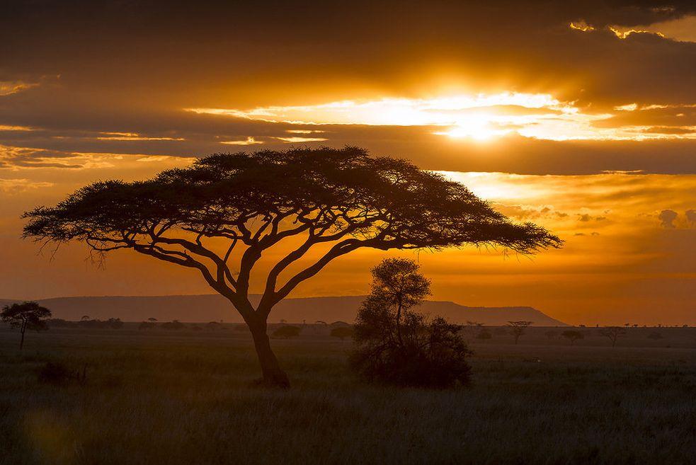 красивые картинки африка усовершенствовать свой охотничий