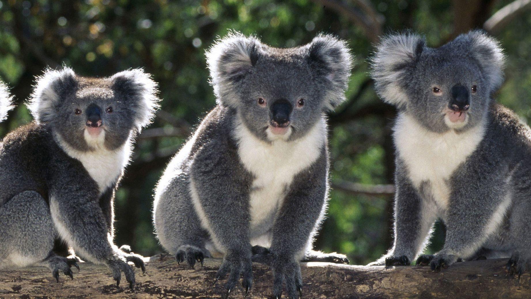 Животные фото картинки с названиями