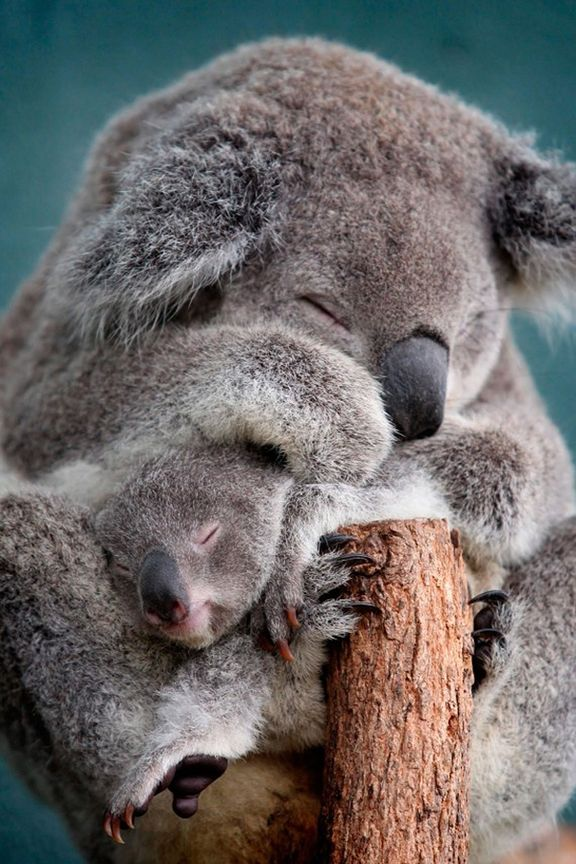 Спящие звери картинки