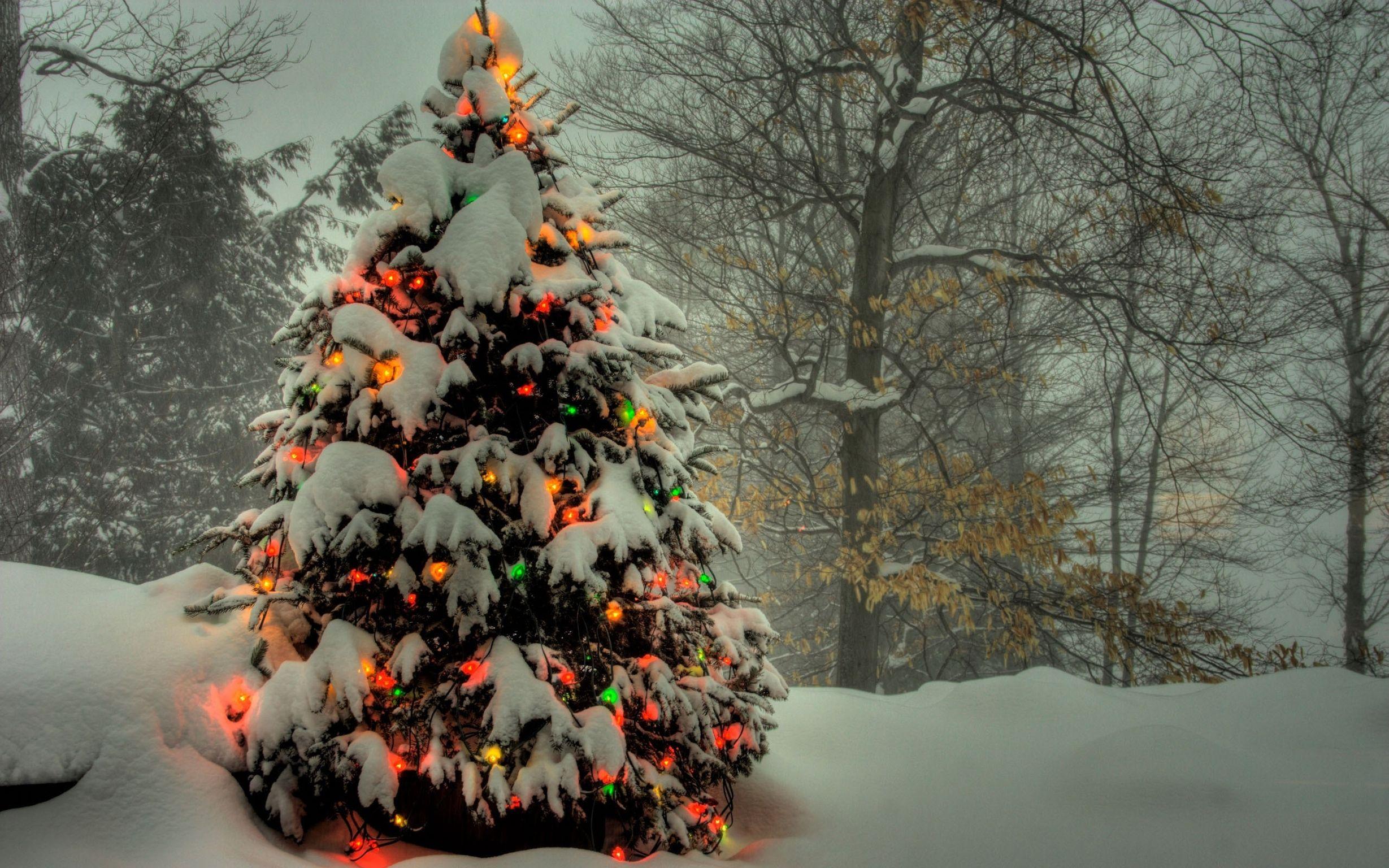 картинки новогоднего леса подвижная девушка