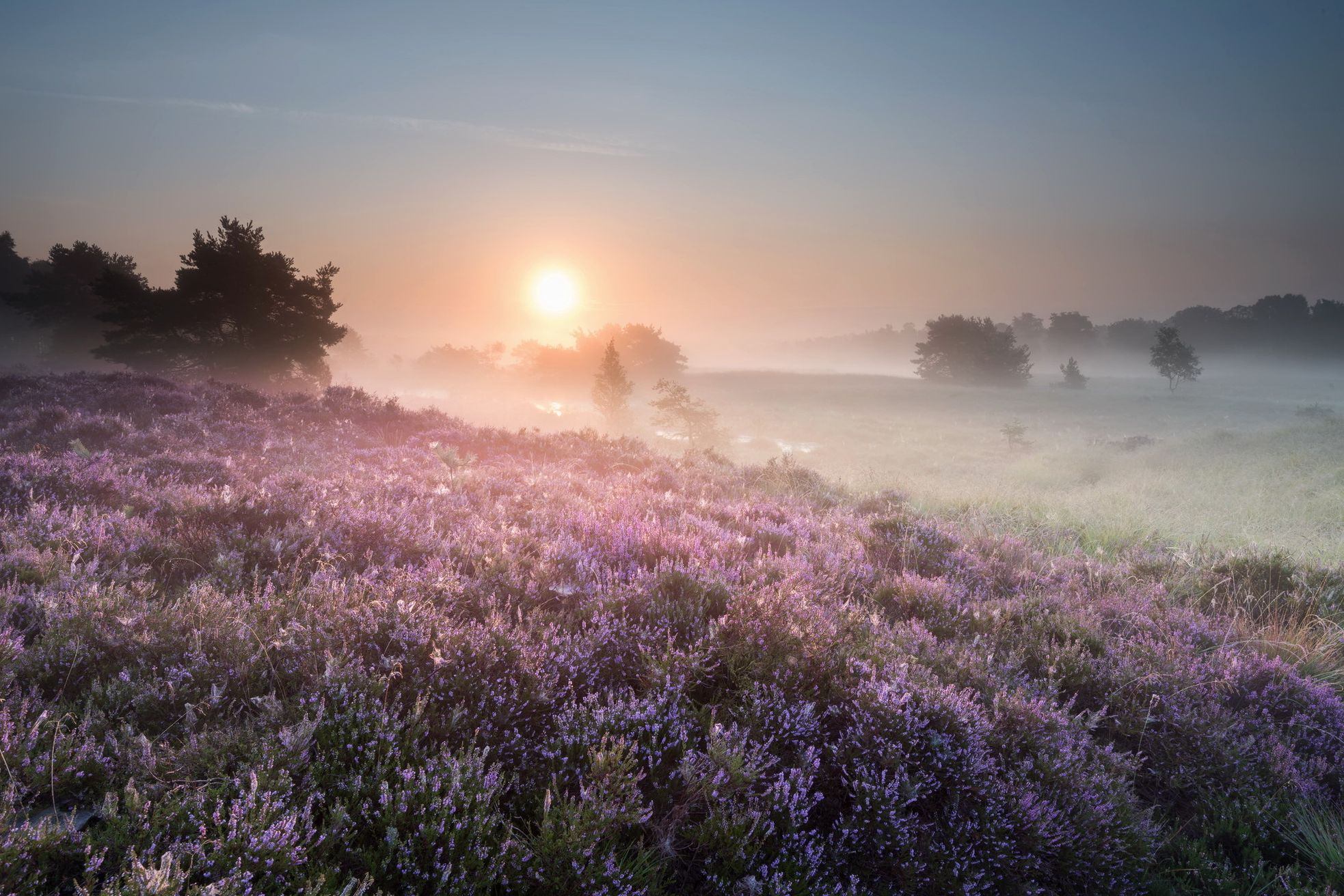 его красивые фото пейзаж сад в тумане ставьте такую тыкву