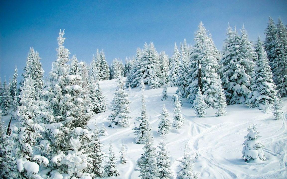 Картинки новогодний леса зимой